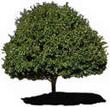 تتركب الشجرة من الأجزاء التالية