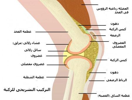 إصابات الركبة وآلامها
