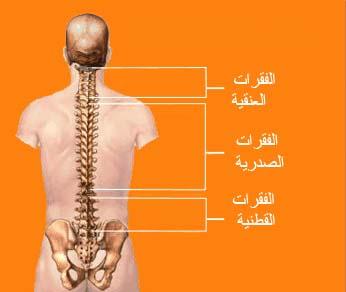 toutes les info sur Les douleurs dorsales BackPain4