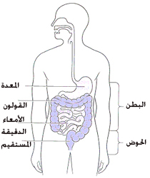 Iridology furthermore Colon additionally Bldxtests logi in addition Search besides Ulcer. on bowel system