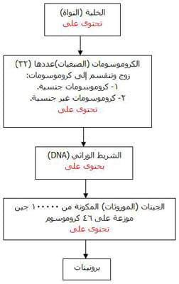 علم الوراثة .. وصفات البسلة!
