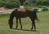 الحصان.. الجواد.. الخيل