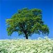 اقسام الشجرة الكاتب المهندس