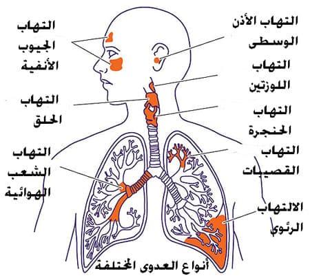 امراض الجهاز الهضمي بالانجليزي والعربي